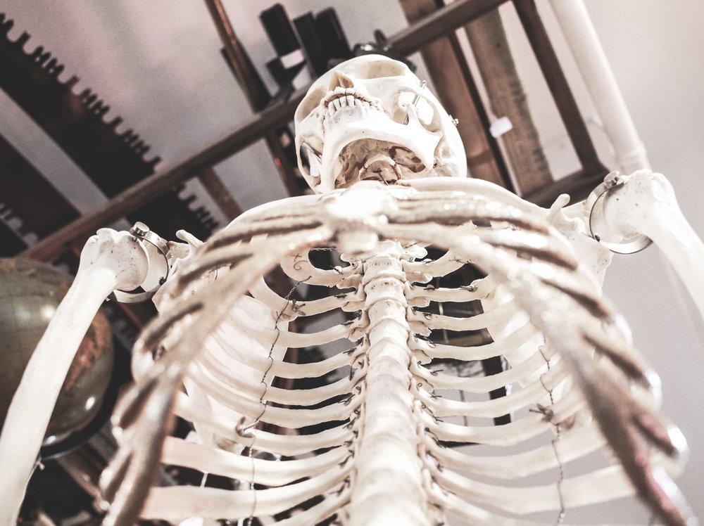 skeleton for lab